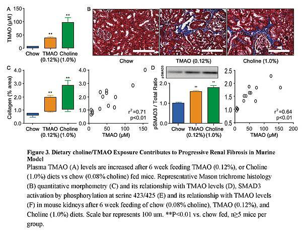 Gut Microbiota-Dependent Trimethylamine N-oxide (TMAO) Pathway Contributes to Both Development of Renal Insufficiency and Mortality Risk in Chronic Kidney Disease_頁面_15.jpg