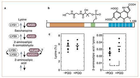 A new redox-cofactor vitamin for mammals.jpg