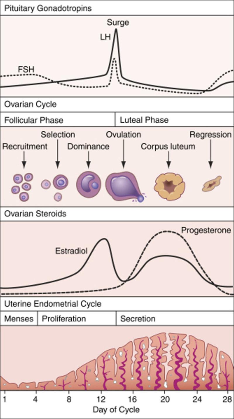 uterus_1000 (2).jpg