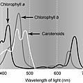 植物色素的吸收光譜