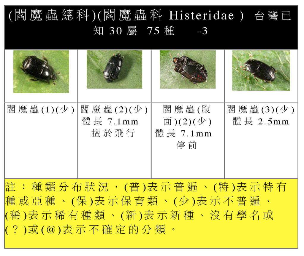 Staphylinidae-12.png