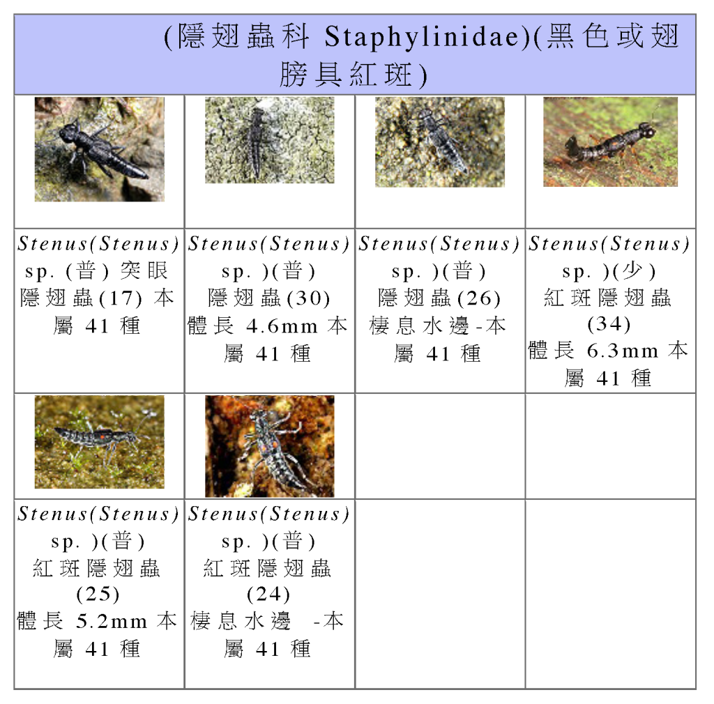Staphylinidae-05.png