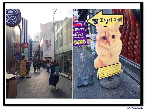 明洞CAT CAFE.jpg