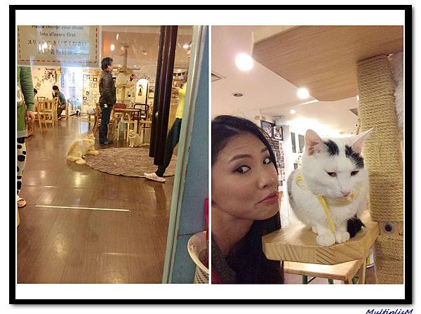 明洞CAT CAFE2.jpg