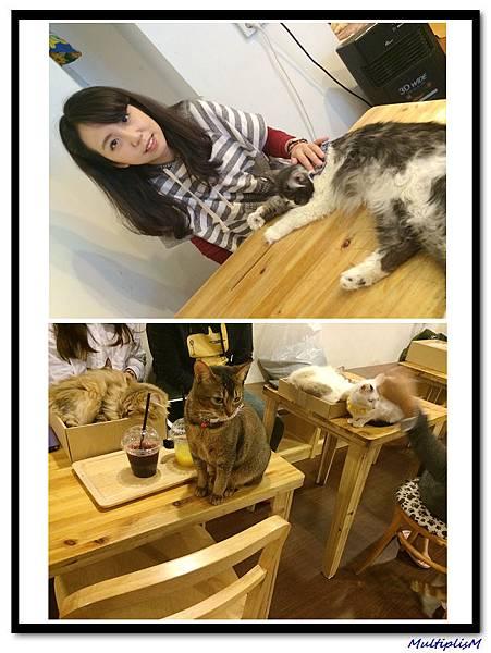 明洞CAT CAFE3.jpg