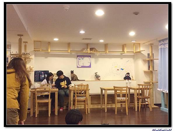 明洞cat cafe4.jpg