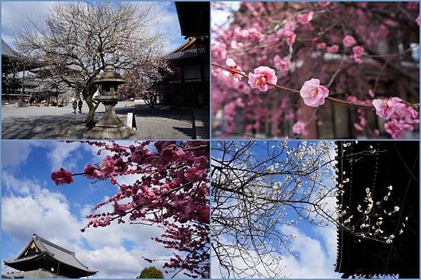 京都西本願寺0021.JPG