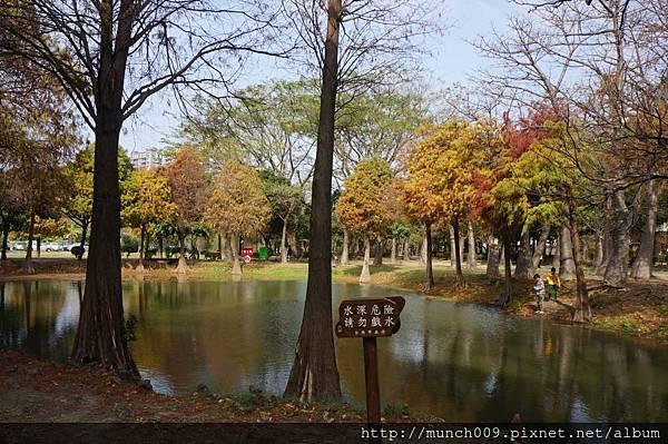 巴克禮公園賞落羽松0007.JPG