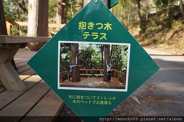 花見山散步趣0011.JPG