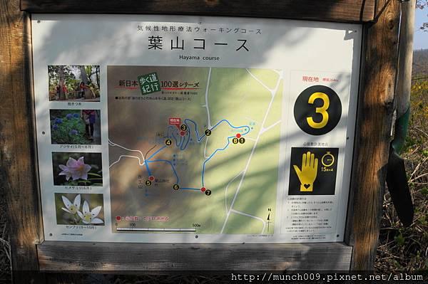 花見山散步趣0013.JPG