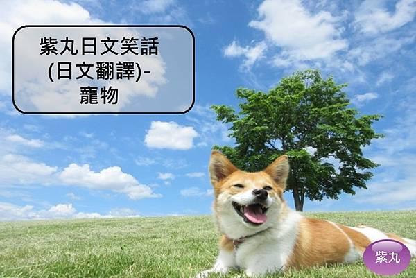 紫丸日文寵物封面