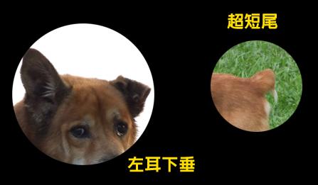 在台北萬華走失的襪子的特徵特寫