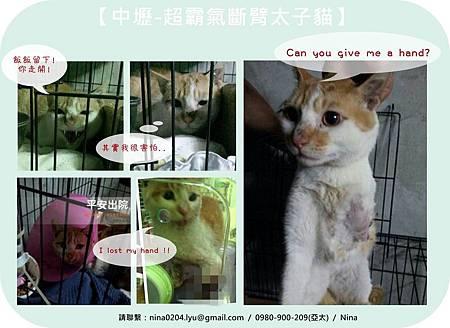 太子貓.jpg