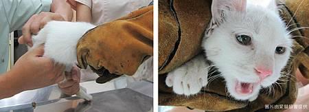 cats (2).jpg