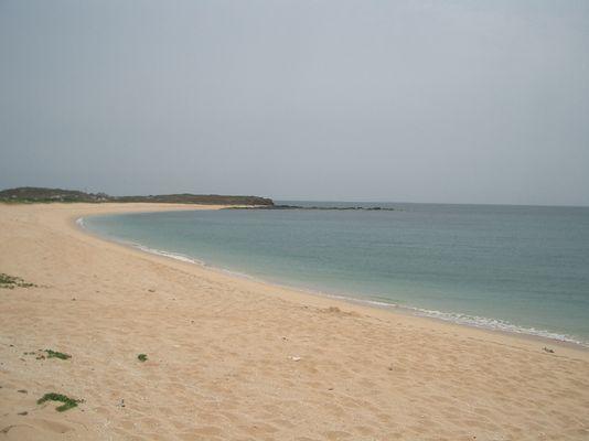 綠蜥龜上岸海灘