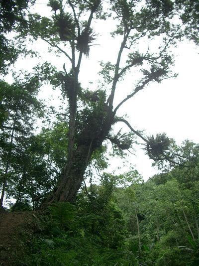 長滿植被植物的大樹