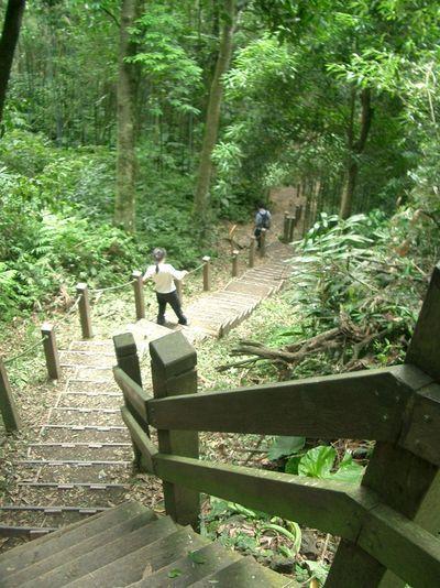 陡下的木梯