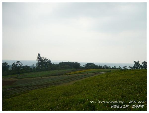 花海.jpg