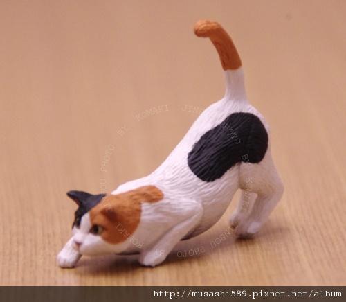 組起來是很正常的三毛貓