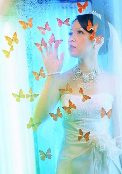 第一張浪漫蝴蝶