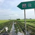 2016-0514後壁無米樂_50.jpg