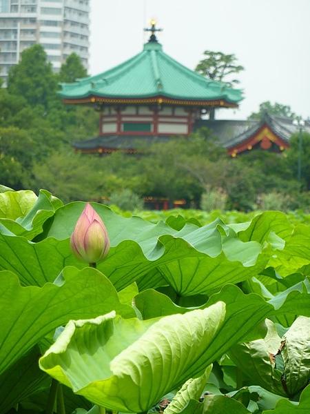 Lotus03.jpg