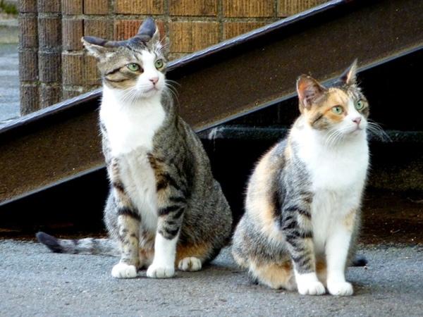 catest4.jpg