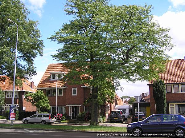 美麗的房子和樹
