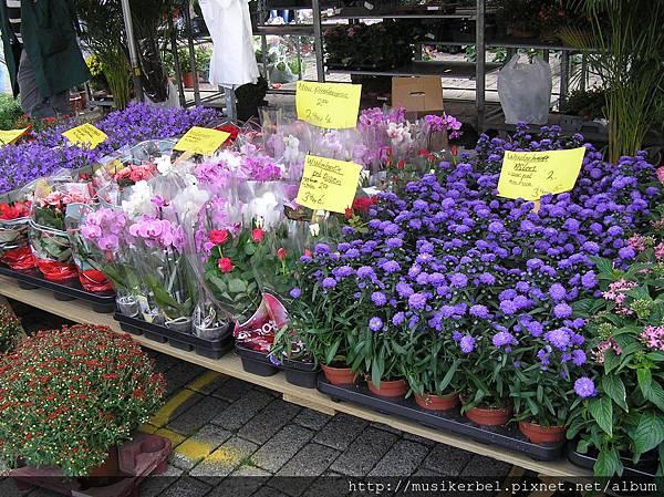 紫色的花朵也很多