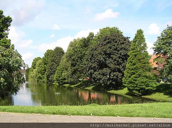 水塘旁的樹們