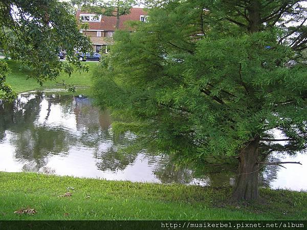 樹和水的關係