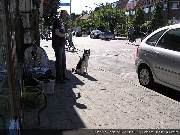 路上的狗兒