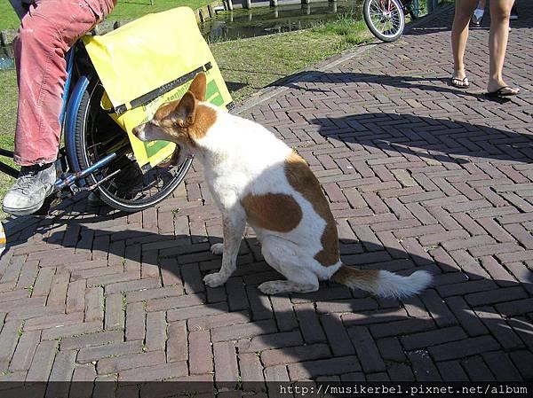 打呵欠的狗狗