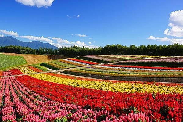 色彩の丘9月.jpg