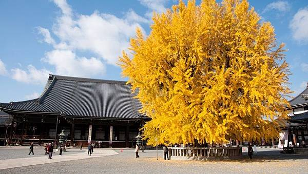 本願寺(西本願寺)|古都京都の文化財1-780x440