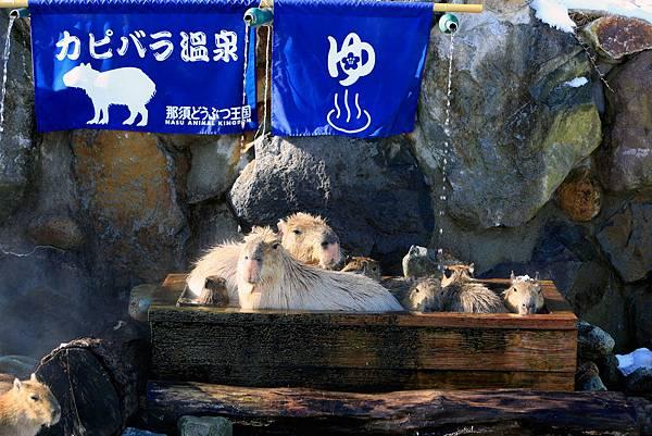 カピバラ温泉-thumb-1500x1000-1131.jpg
