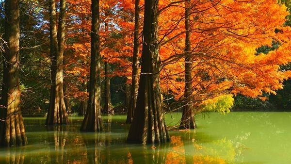篠栗九大の森2.jpg