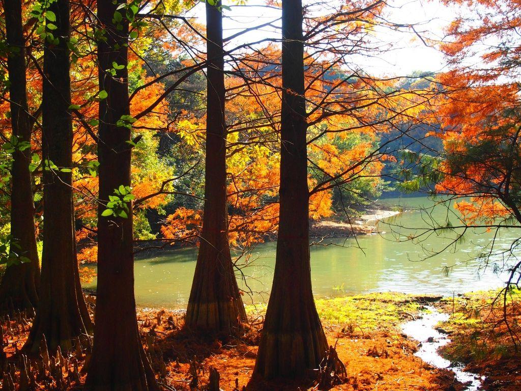 篠栗九大の森3.jpg