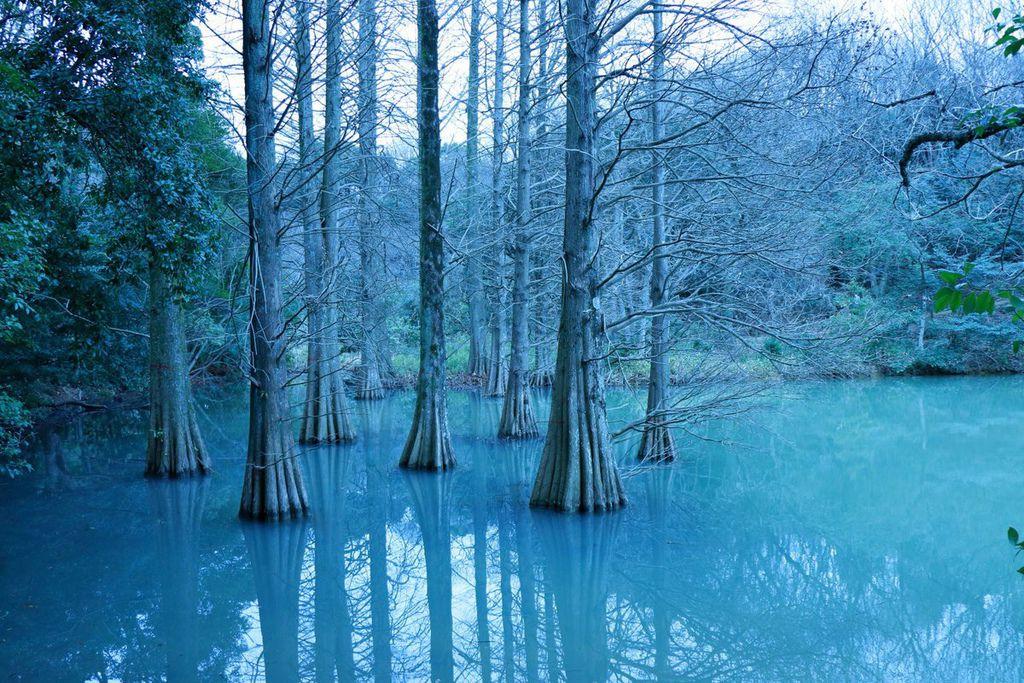 篠栗九大の森4.jpg