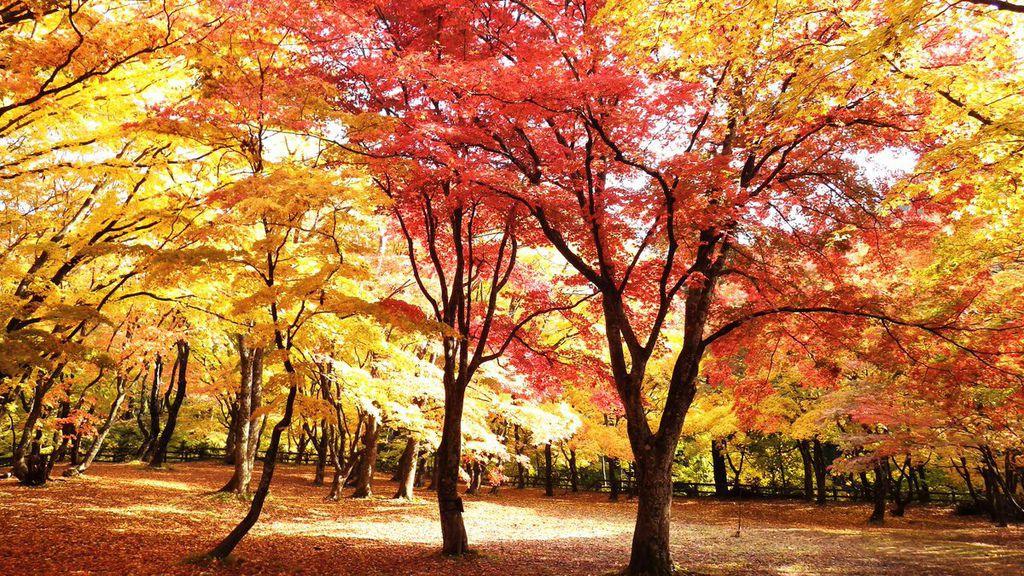 中野楓葉山