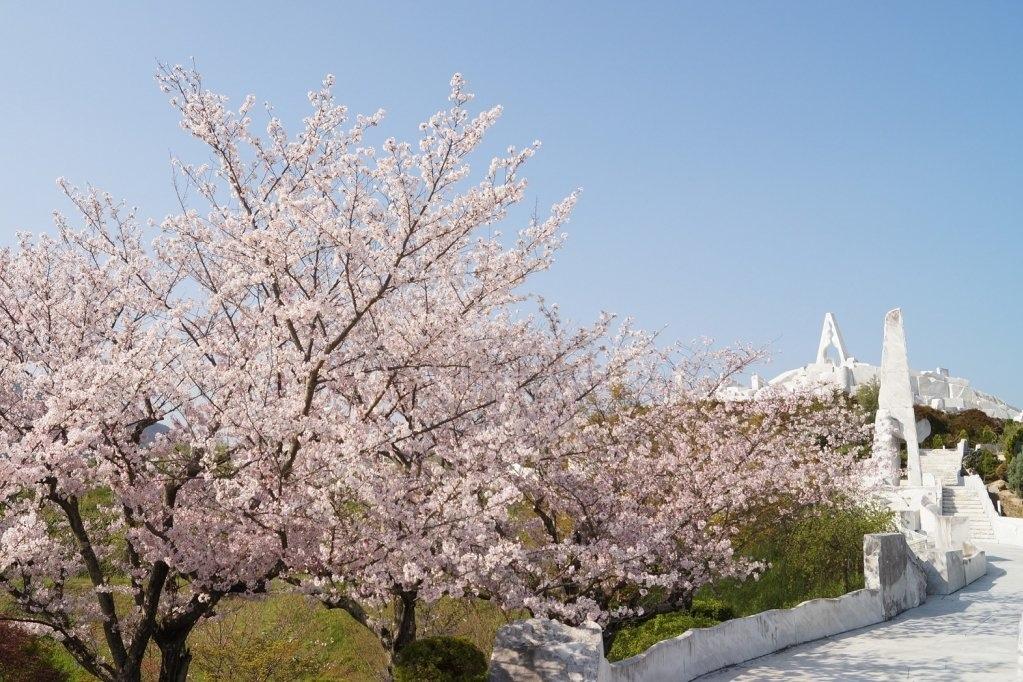 耕三寺桜まつり