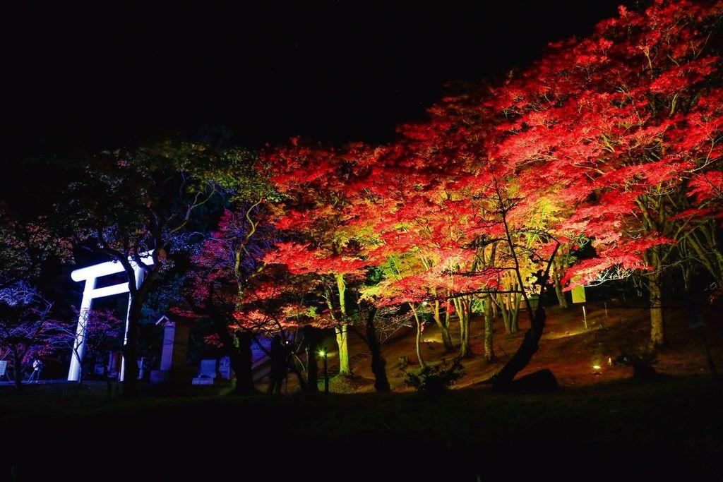 土津神社の紅葉と七色LEDライトアップ