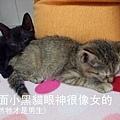 學長拍的兩小貓合照