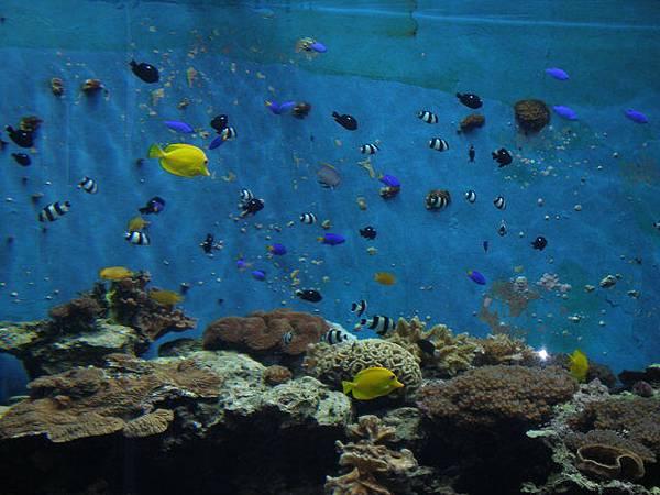 珊瑚主題館開始