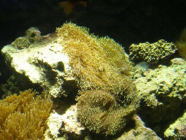 珊瑚館結束
