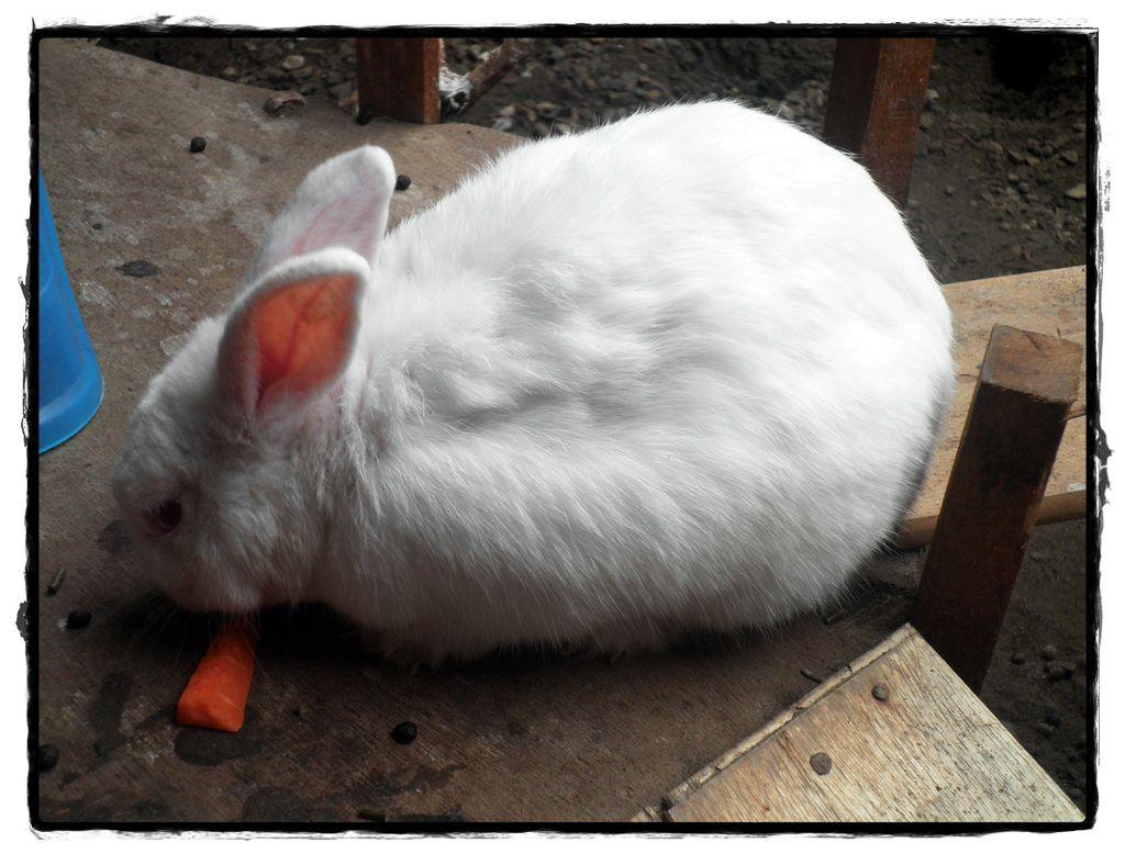 兔子P2270087 20110227.JPG