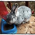 兔子P2270086 20110227.JPG