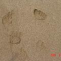 我的小腳Y子印喔~~