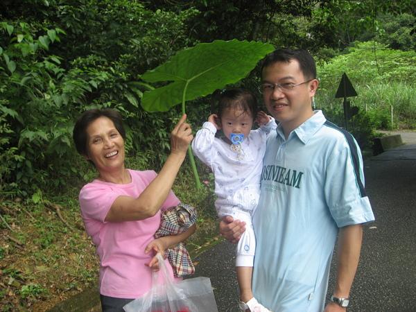 阿媽:『葉子大到可以當雨傘了喔!!』