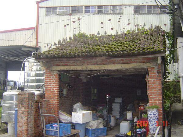 這是我曾姨婆家的屋頂~還長出很特別的植物喔~~